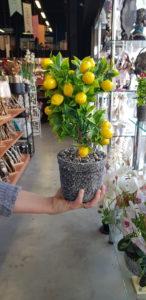 Süs yapay minik limon ağacı modelleri