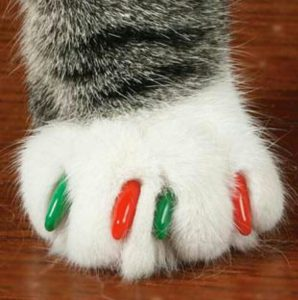 Kediler için plastik takma tırnak modelleri
