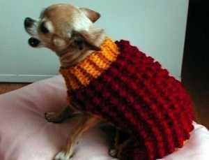 nohut örgü desenli köpek giysisi