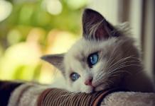 Sevimli ve masum kedi fotoğrafı